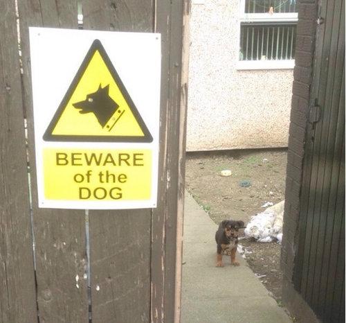 「猛犬注意」の看板04