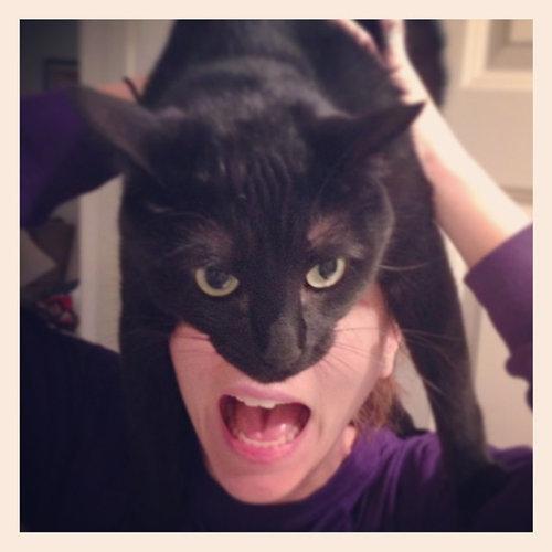 猫でバットマン04