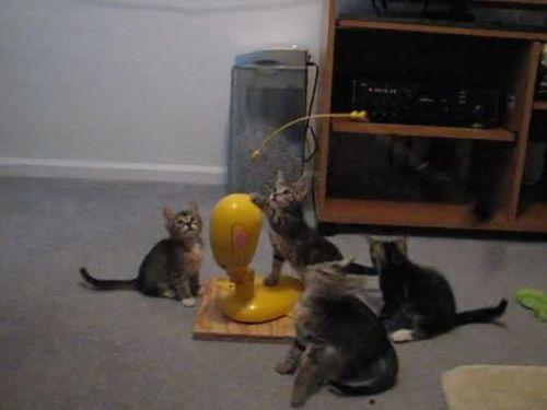 思うままに釣られる子猫たち01