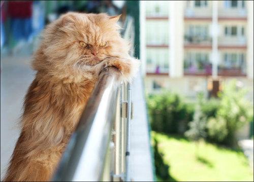 怒った猫06