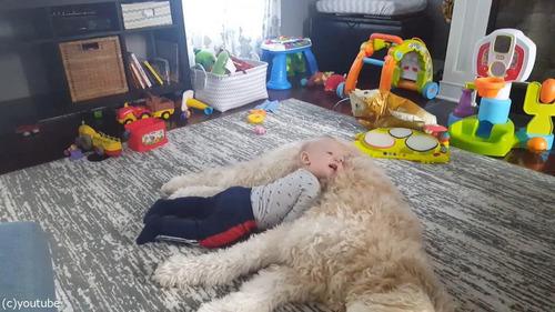 もふもふの犬をベッドにしようとする赤ちゃん02