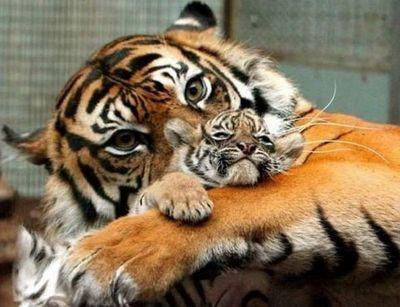虎の子09