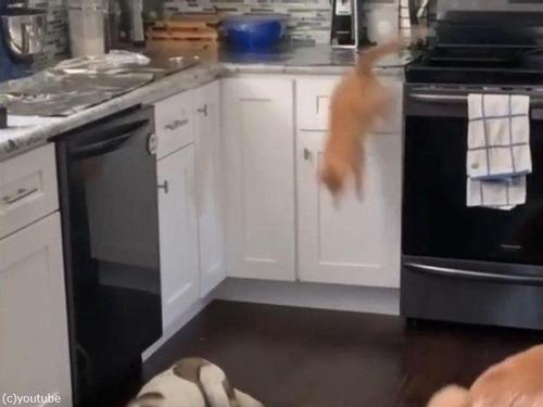 「猫がキッチンカウンターの上に乗らないようにする方法」03