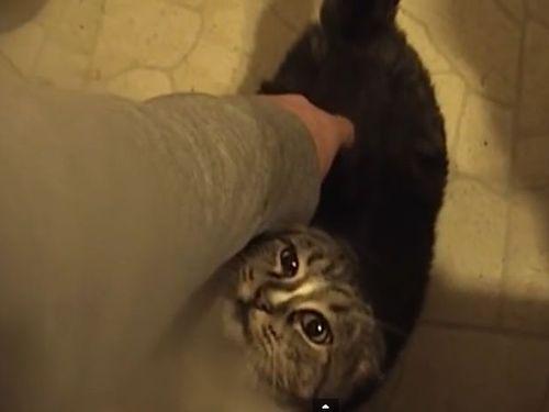 猫の弱点01