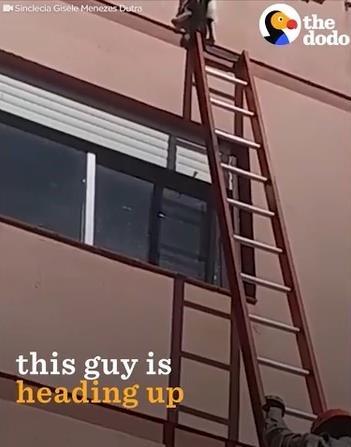 ビル4階で動けなくなった猫を救出02