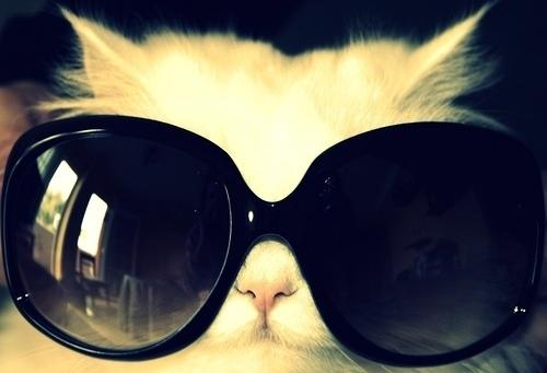メガネ猫22