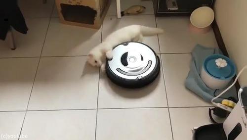 ルンバとともに回転する猫01