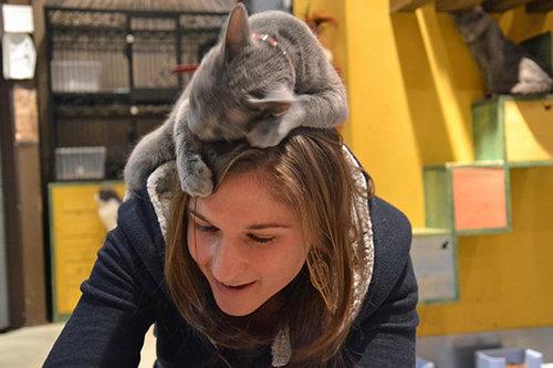 猫に生活を脅かされる06
