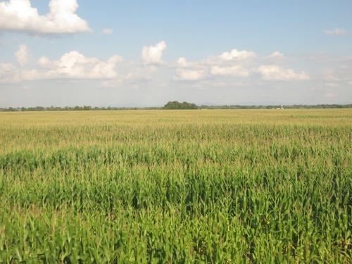 ドイツのトウモロコシ畑に巨大なクレーターが出現する