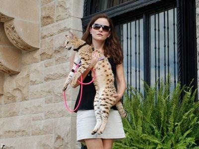 世界一背の高い猫00