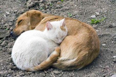 動物枕13