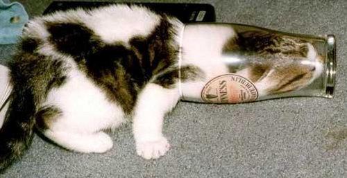 猫は液体説01