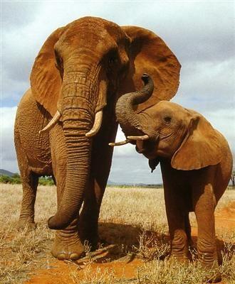 親子愛であふれる動物たち13
