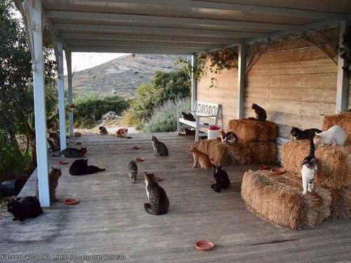 ギリシャの島で猫の管理人を「1名」募集00