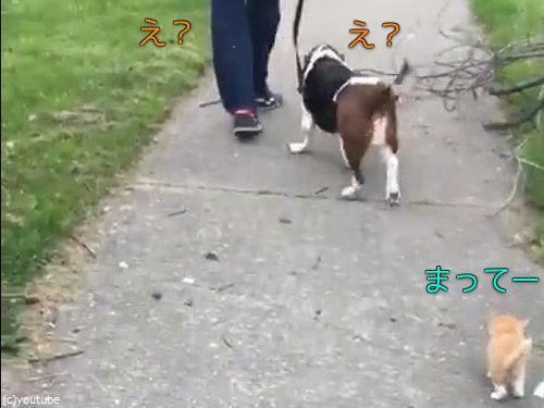 犬の散歩をしていたら迷子の子猫がついてきた00