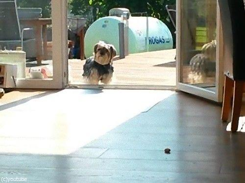窓が無くても入って来ない犬01