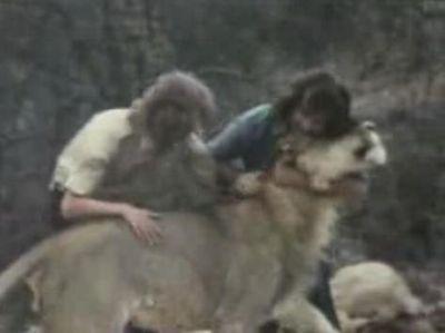 ライオンのクリスチャン「Christian」と再会07