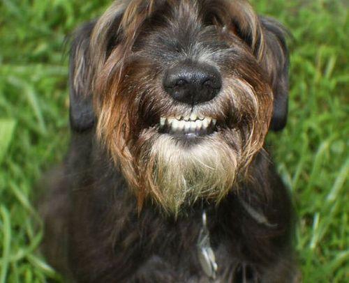 笑う犬08