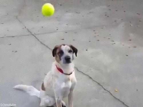 「うちの犬とボール」02