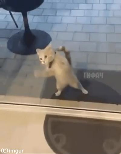 猫「ニャンで通れないの」01