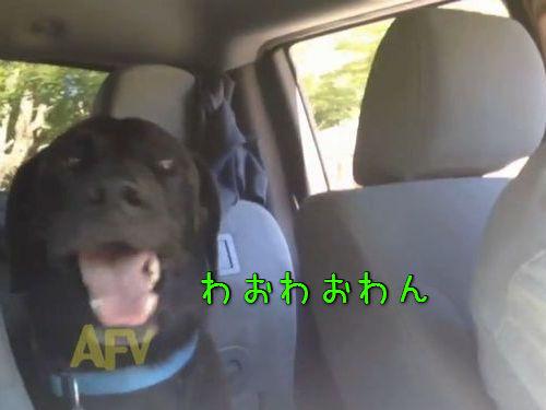 犬語をしゃべった00