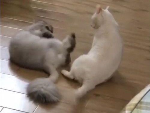 猫キックは当たらなくても強かった03