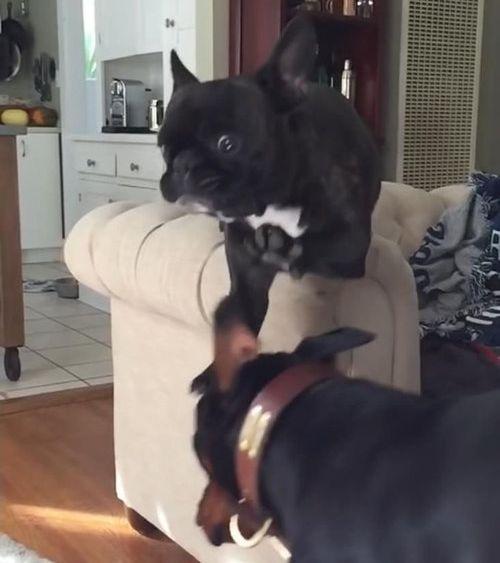 犬のジャンプ失敗04