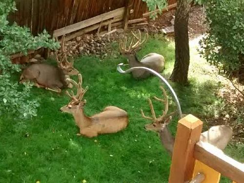 コロラド州の庭03