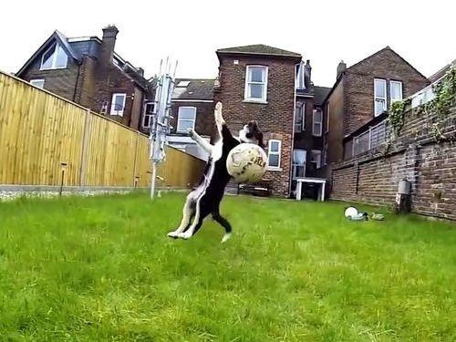 運動神経の悪い犬たち01