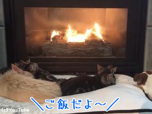 暖炉でくつろぐペットたちに00