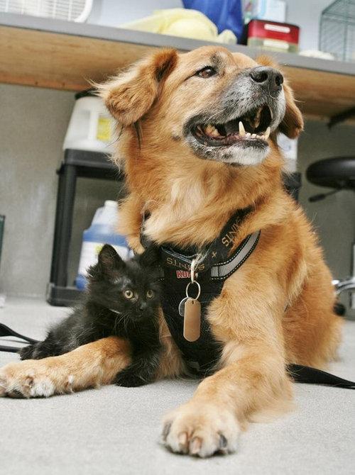 ハリケーン・カトリーナから救出された犬、猫のお母さん役となる07