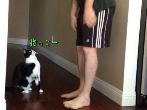 抱っこ猫00