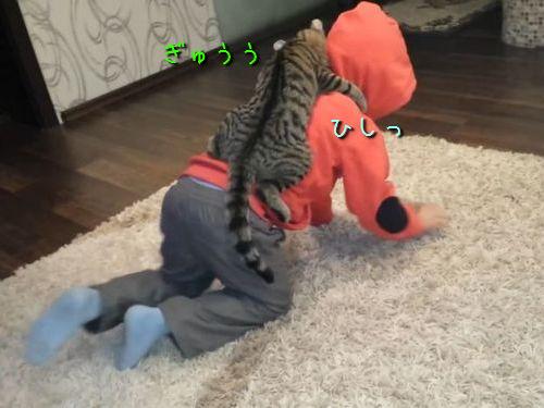 お馬さんごっこが大好きな猫00