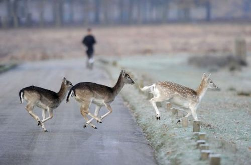 道路を渡る動物21