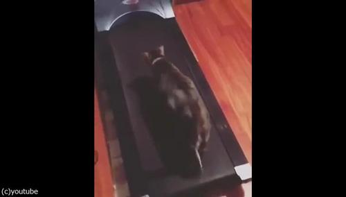猫「なぜこの昼寝場所は動くニャ!」02