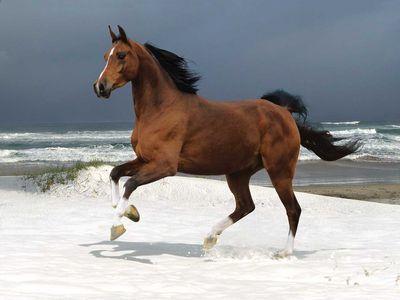 馬の精子ドリンク00