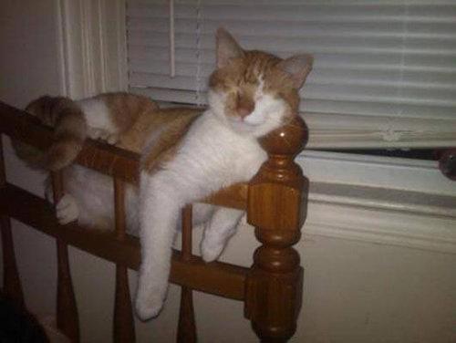 どこでも眠る猫03