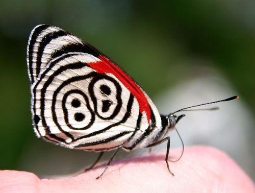 89番の蝶々03
