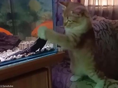 猫vs水槽01
