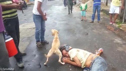 飼い主さんを全力で守る犬02