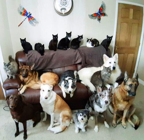 猫9匹を含む17匹のペットを座らせて記念撮影に成功した飼い主01