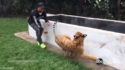 虎を背後から脅かすと03