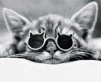 メガネ猫04
