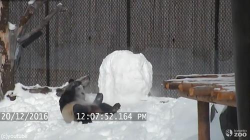 パンダVS雪だるま06