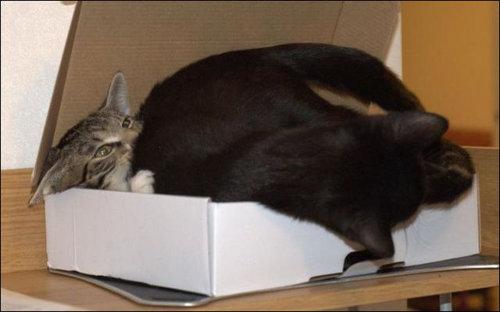 箱に入る猫02