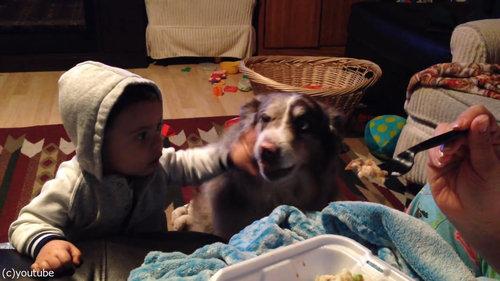 隣の犬「ママー」赤ちゃん「えっ」03