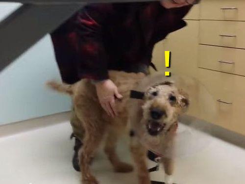 盲目の犬が視力回復して家族を見たとき00