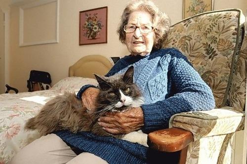 猫が飼い主を求めて施設まで04
