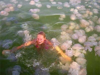 水面を埋め尽くすほどのクラゲの海を泳ぐ女性02