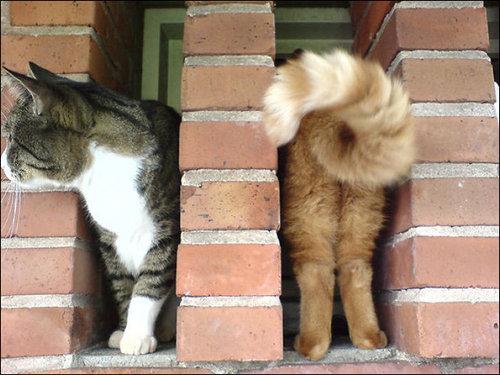 楽しい猫たち13